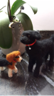 Tina Carrick's felted dogs
