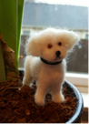 Tina Carrick's felted dog